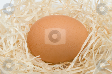 Egg in a nest stock photo, Egg in a nest by Andrey Butenko