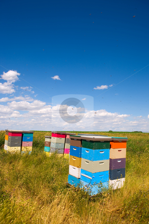 Bee hives stock photo, Colorful bee hives with bees swarming in the blue sky by Steve Mcsweeny