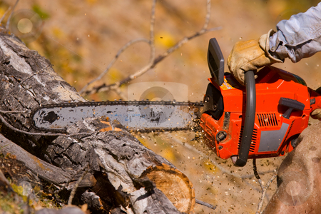 Logging stock photo, A  lumberjack working with a chainsaw by Steve Mcsweeny