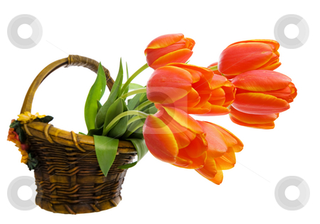 Tulips stock photo, A bunch tulips in a ceramic flower basket by Steve Mcsweeny