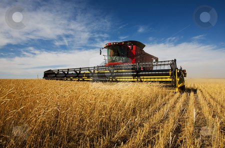 Harvester stock photo, Modern combine harvester working on a wheat crop by Steve Mcsweeny