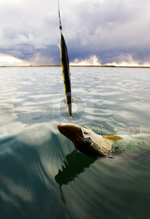 Last catch stock photo, A fish is caught with a storm moving in by Steve Mcsweeny