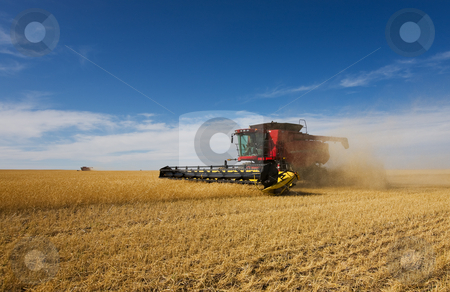 Autumn harvest stock photo, A pair of combine harvesters working on a wheat crop by Steve Mcsweeny