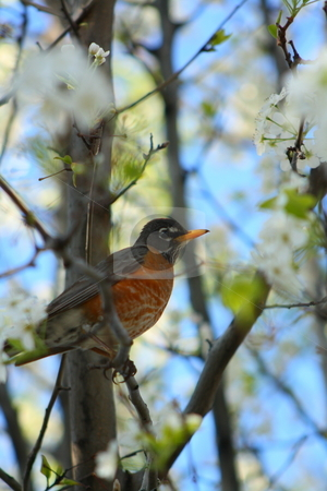 Bird on a tree with flowers stock photo, A bird on a tree by Chris Torres