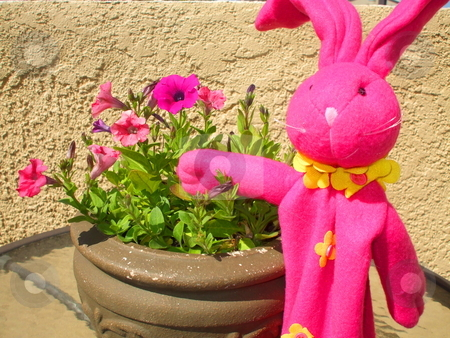 Pink Bunny Next to Pink Petunia Flowers stock photo,  by Michael Felix
