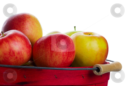 Apple Basket stock photo, A freshly harvested basket of apples ready for market. by Brenda Carson