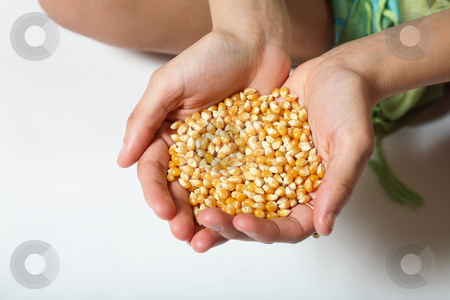 Feed the Hungry stock photo, Corn seed in out-stretched hands. by Brenda Carson