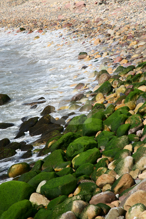Pacific Shoreline stock photo, Pacific Ocean shoreline studded with algae covered rocks.  Puerto Vallarta, Mexico. by Brenda Carson