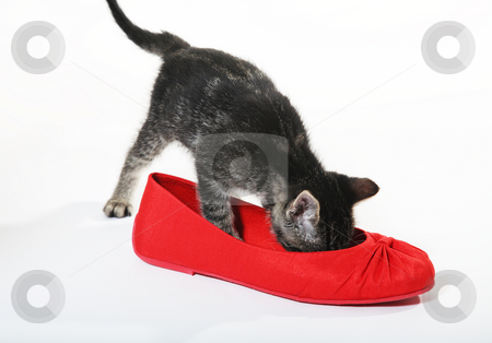 Snoop in Slipper stock photo, A curious, tabby kitten checks out a red shoe. by Brenda Carson