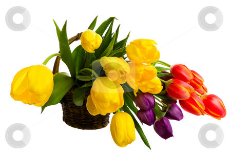 Fresh Cut Tulips stock photo, A variety of freshly cut tulips in a brown ceramic basket.  Shot on white background. by Brenda Carson