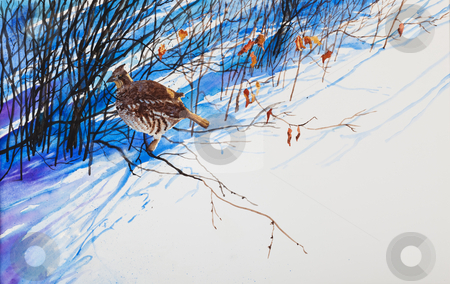Snow Shadows stock photo, A prairie winter scene of a  prairie chicken hiding in the tall shadows cast by the shrubbery.  An original watercolor painting. by Brenda Carson