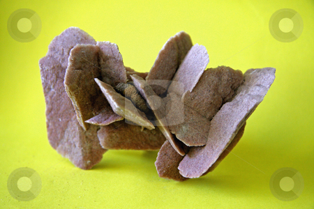 Australian Gypsum stock photo, An example of the mineral Gypsum - 'Desert Rose' located in South Australia. by Adam Goss