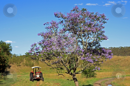 Lonely Jacaranda Tree stock photo, An isolated jacaranda tree in a rural paddock accompanied by a nearby tractor. by Adam Goss