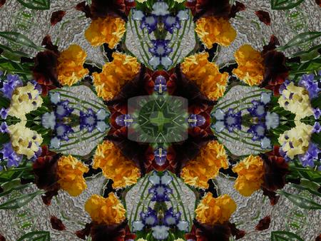 Flooding Iris (Background Pattern) stock photo, Flooding Iris (Background Pattern) by Dazz Lee Photography