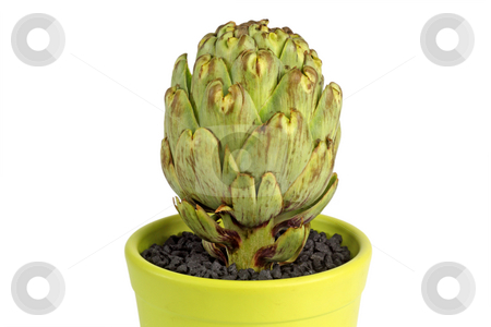 Artichoke stock photo, Artichoke isolated on white background by Birgit Reitz-Hofmann