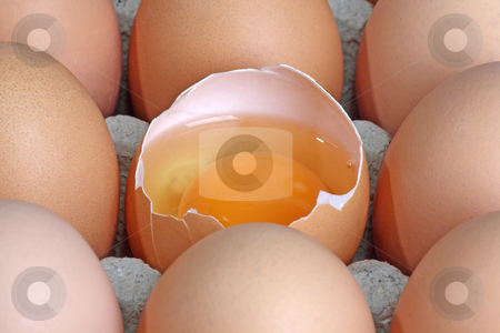 Fresh eggs stock photo, Brown eggs in detail on a tray by Birgit Reitz-Hofmann