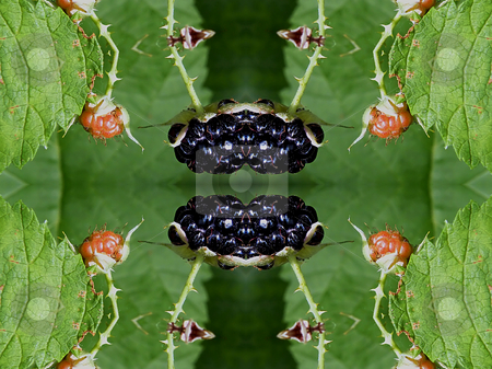 Very Berry Background Pattern stock photo, Very Berry, Background Pattern containing wild raspberries. by Dazz Lee Photography