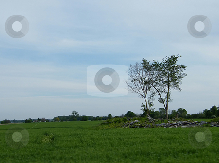 Trees Growing Amoung Rubble stock photo, Trees Growing Amoung Rubble in a country field. Located in Northwest Ohio. by Dazz Lee Photography