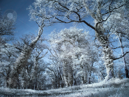 Infrared forest stock photo, Infrared picture of a beautiful forest by Laurent Dambies