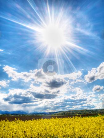 Colza field under spring sun stock photo, Colza field under spring sun HDR processed by Laurent Dambies
