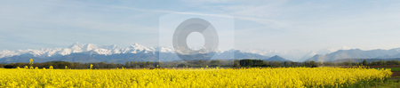 Panoramic landscape of a rapeseed field stock photo, Panoramic landscape of a rapeseed with French Pyrenees mountains in the background by Laurent Dambies
