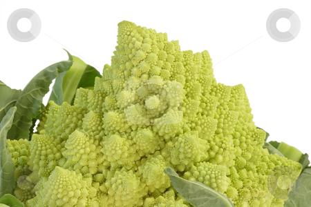 Romanesco_5 stock photo, Romanesco cabbage isolated on white background by Birgit Reitz-Hofmann