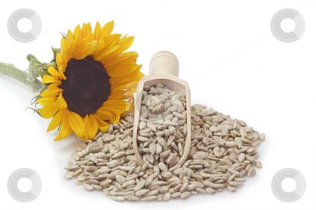 Sunflower seeds stock photo, Sunflower seeds on a bright background by Birgit Reitz-Hofmann