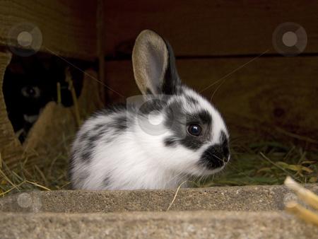 Cute rabbit stock photo, Young rabbit in barn. Shot on a farm. by Birgit Reitz-Hofmann