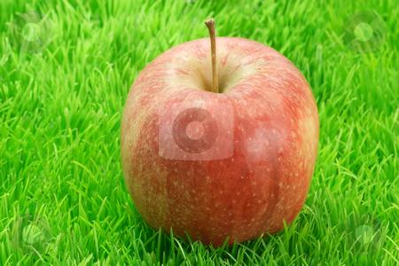 Red apple_2 stock photo, Fresh red apple on green grass. Shot in Studio by Birgit Reitz-Hofmann