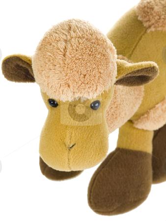 Cute camel stuffed toy stock photo, Cute stuffed animal on white background by Birgit Reitz-Hofmann