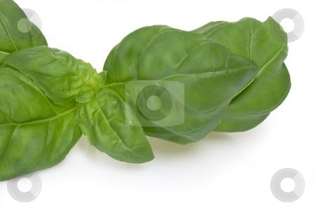 Basil leaf stock photo, Basil leaf in detail on bright backround by Birgit Reitz-Hofmann