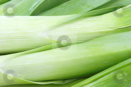 Leek stock photo, Fresh in detail as background by Birgit Reitz-Hofmann