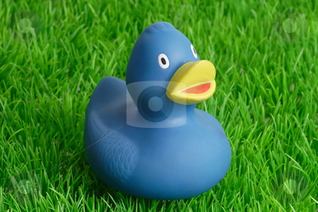 Rubber duck stock photo, Blue rubber ducks bath toy on grass background by Birgit Reitz-Hofmann