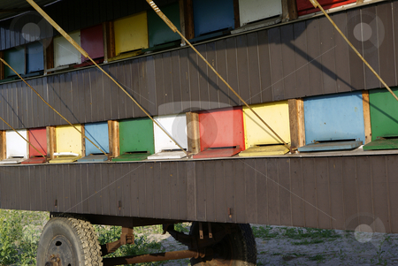 Apiary stock photo, Colourful apiary wagon standing in rape field by Jolanta Dabrowska