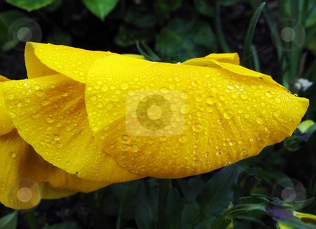 Flowers stock photo,  by Kamen Atanassov