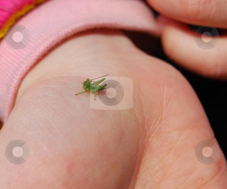 Newborn grasshopper stock photo, Green baby grasshopper sitting on the kid's palm by Leyla Akhundova
