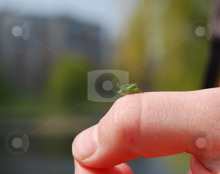 Newborn grasshopper stock photo, Green baby grasshopper sitting on the kid's finger by Leyla Akhundova