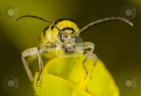 Bug stock photo, Close up on a bug in the field by Kobby Dagan
