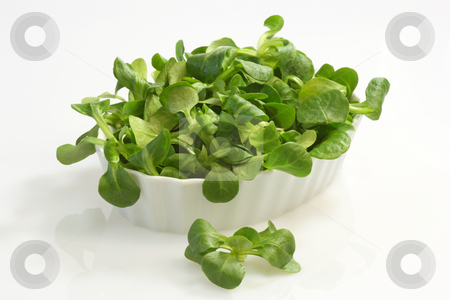 Field salad stock photo, Field salad in a bowl on white background by Birgit Reitz-Hofmann