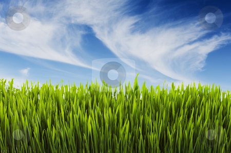 Summer scene stock photo, Long lush grass and blue summer sky by Steve Mcsweeny