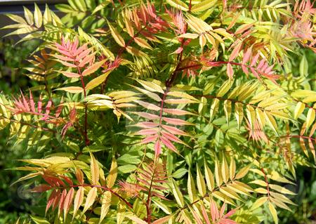 Abstract botanical background stock photo, Abstract botanical red and green leaves background by Julija Sapic
