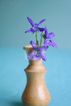 Wild Violets in a Wooden Vase stock photo, Three wild violets in a hand turned miniature wooden vase by Helen Shorey