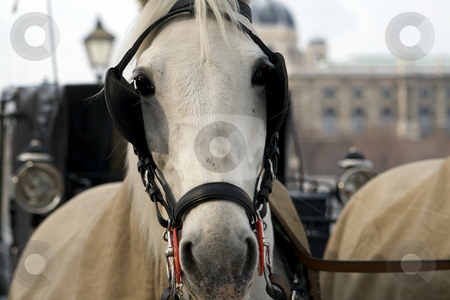 Horse at me stock photo, Horse at me by Creative Shield