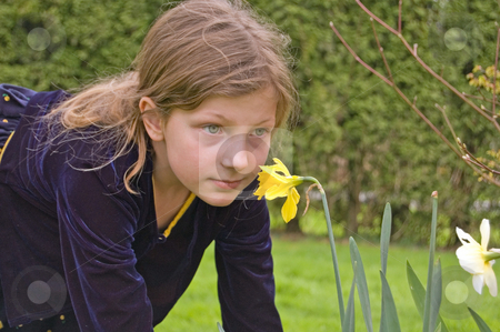 Pretty 8 Year Old Girl Smelling Flower stock photo, Pretty 8 year old Caucasian with long brown hair and beautiful green eyes is smelling a yellow daffodil flower while wearing a navy blue dress. by Valerie Garner