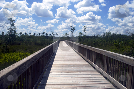 Nature Board Walk stock photo, A Nature Board Walk in the Florida Everglades Preserve by Robert Cabrera