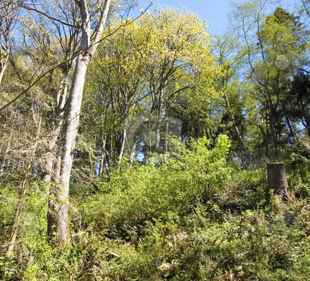 Nature Spring Trees and Foliage Uphill stock photo, This nature shot feature new spring growth on trees and foliage with an uphill view of blue sky. by Valerie Garner