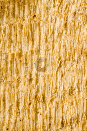 Wood Texture stock photo, A close-up of the texture of a wooden plank by Petr Koudelka
