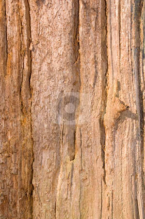Natural old bark stock photo, Natural weathered old bark nice for backgrounds by Karin Claus
