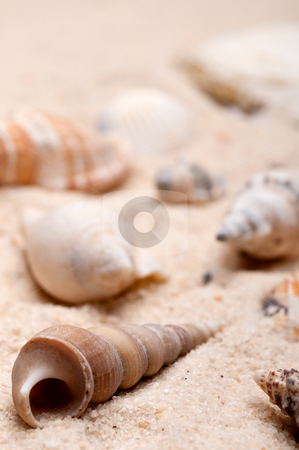 Shallow focus vertical macro of seashells on sand stock photo, Shallow focus vertical macro of seashells on sand by Vince Clements