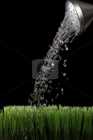 Vertical image of water sprinking from a silver garden watering  stock photo, Vertical image of water sprinking from a silver garden watering jug onto green grass with a black background by Vince Clements